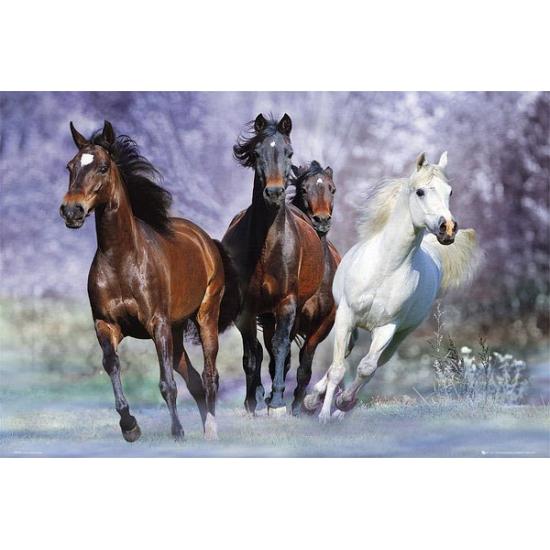 Decoratie poster van paarden