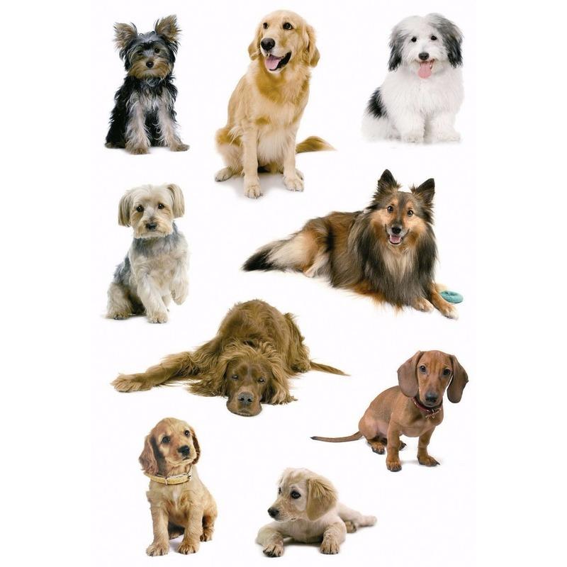 Decoratie honden stickers