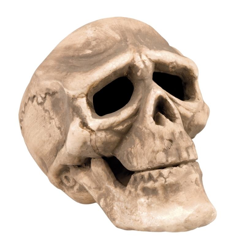 Horror decoratie schedels 22 cm