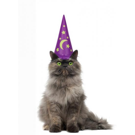 Katten tovenaarshoed